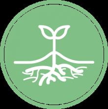 SSB® Biostimulant